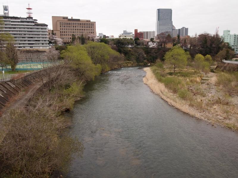 2011年4月の広瀬川の岸辺。約30年ぶりの通学路はあまり変わっていなかった